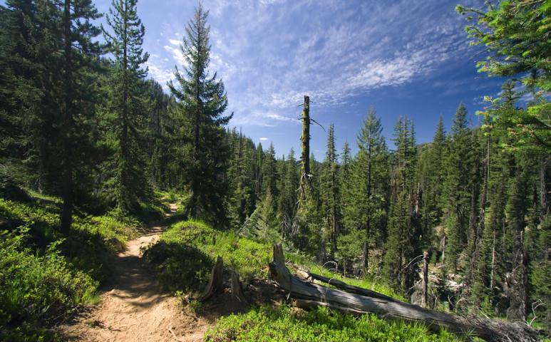 Mennyire fontos az erdő?