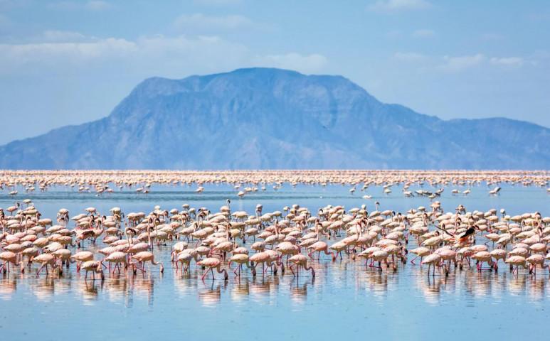 A klímaváltozás a flamingókat is sújtja
