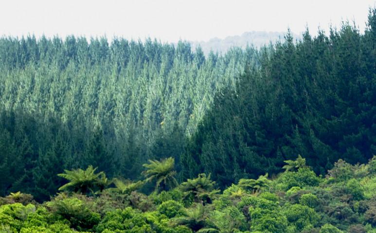 Egy kezdeményezés, 14 ezer millió elültetett fa
