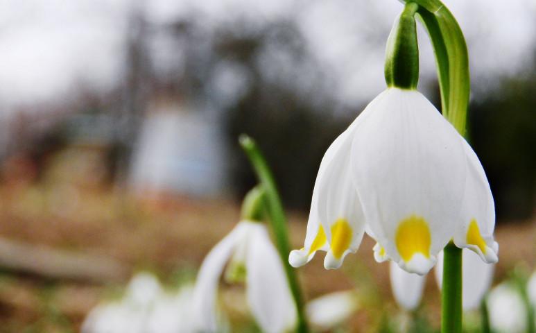Tavaszias idővel búcsúzik a tél
