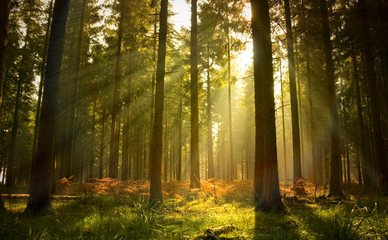 Melyik erdő a jó erdő?
