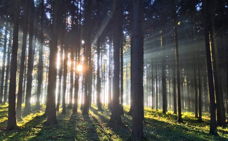 Globális erdőtelepítések kezdődnek