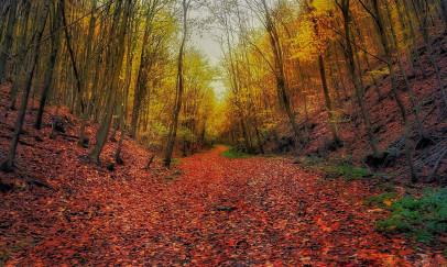 """""""Itt van az ősz, itt van újra"""""""