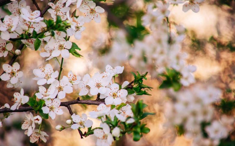 Ragyogó tavaszi hétvége