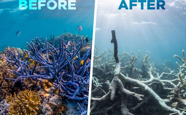 Fehérednek a legészakibb korallzátonyok is