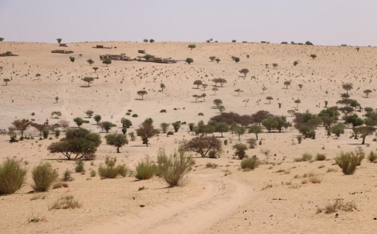 Az afrikai Zöld Fal lehet a megoldás a sivatag visszaszorítására