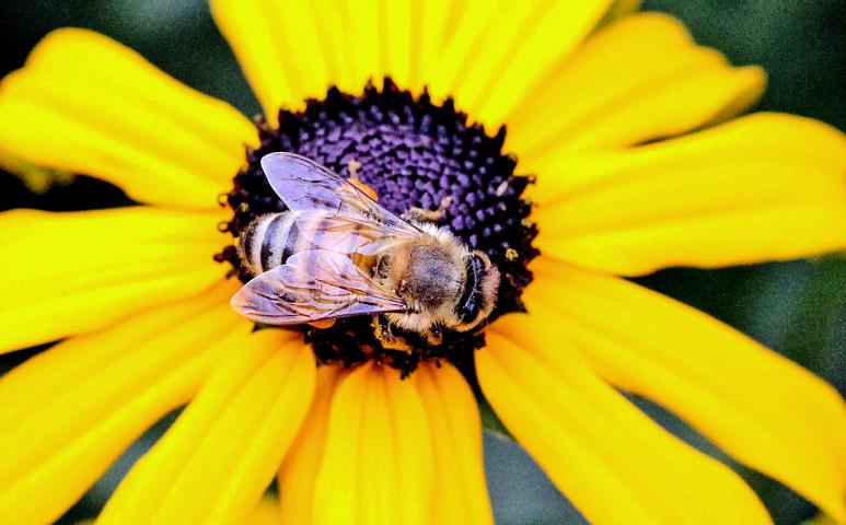 Természetes ellenséggel a méhek pusztítói ellen