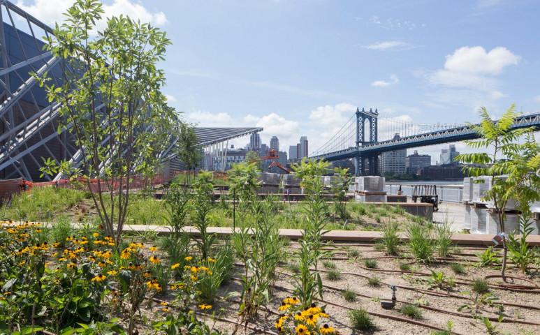 Öko-park épül New Yorkban a tengerszint emelkedés ellen
