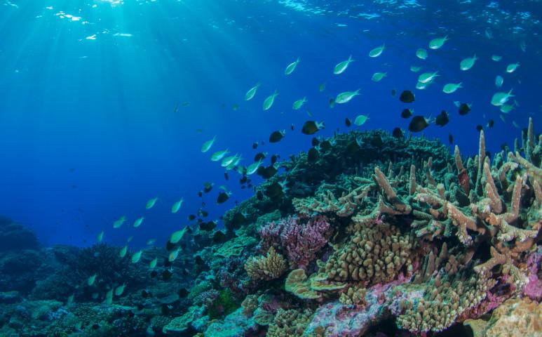 3D nyomtatással a korallok életéért