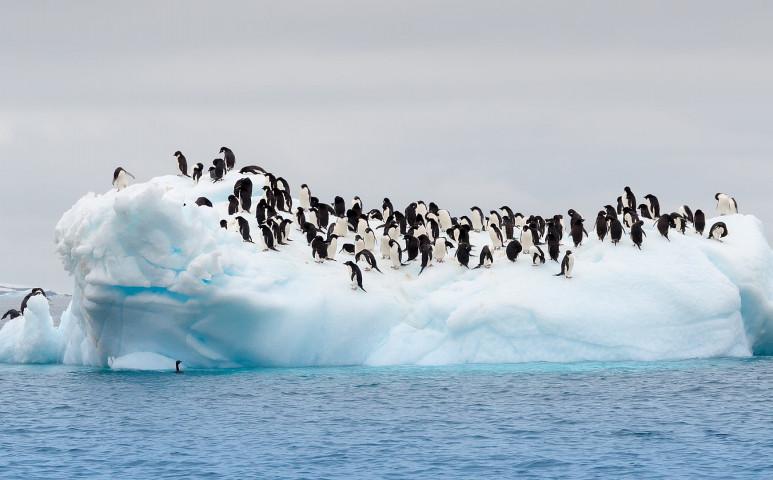 Közel Magyarországnyi területtel csökken naponta az Antarktisz nagysága