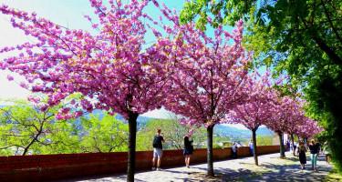Tavaszi séta