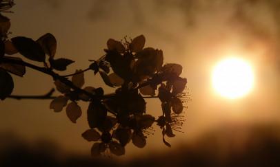 Tavaszi napnyugta