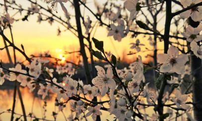 Alkonyat tavasszal