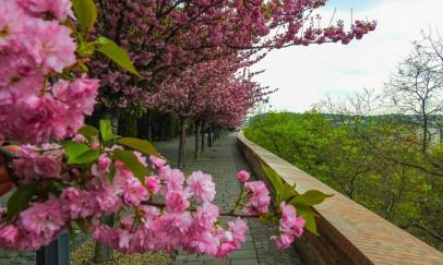 Tavasz Budapesten