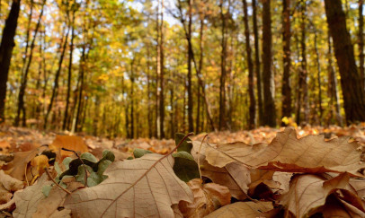 Ősz az erdőben