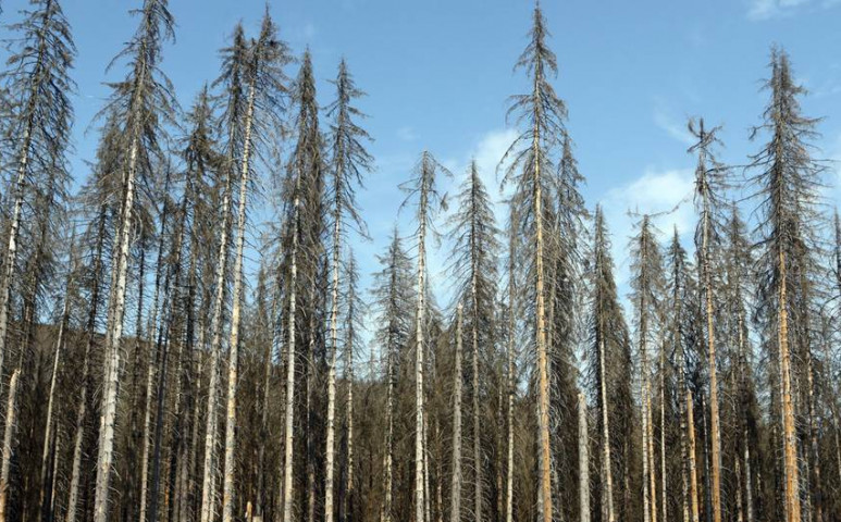 Pusztulnak a fák a klíma miatt