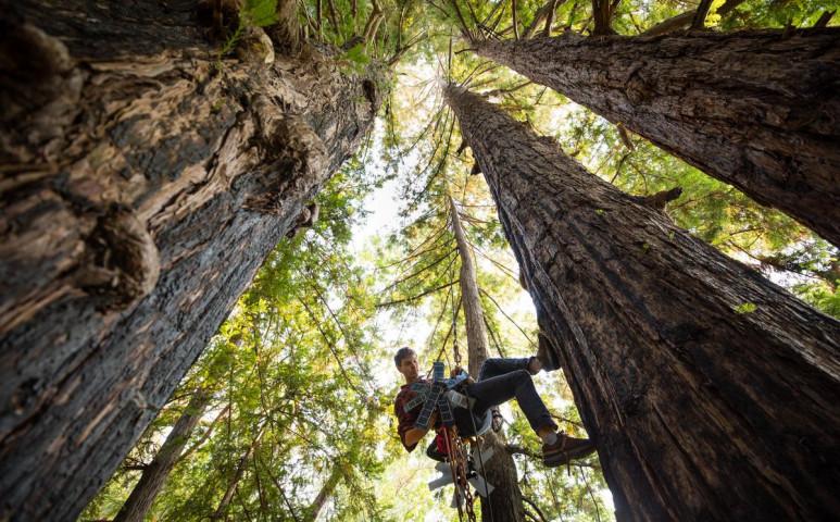 Egy öreg mobil 300 hektár esőerdőt menthet meg