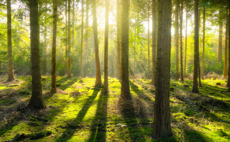 Erdő vagy ültetvény - nem éppen így kellene fákat telepíteni...