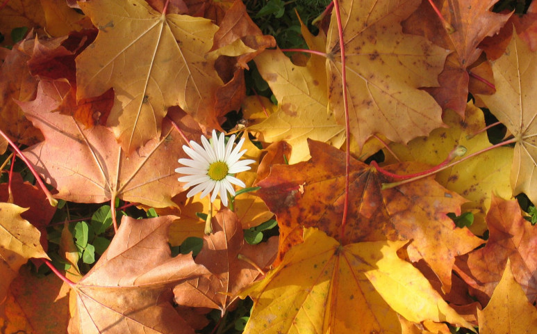 Támad az ősz!