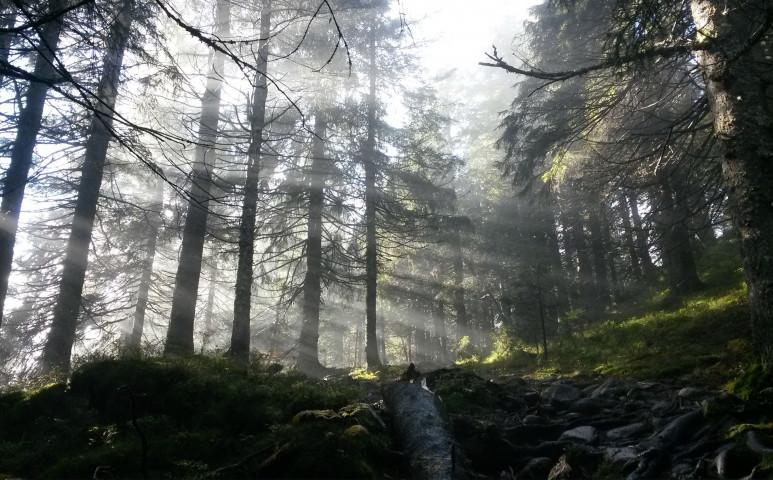 A norvég erdők már biztonságban vannak