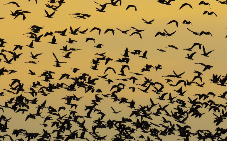 3 milliárd madár - ennyi a veszteség