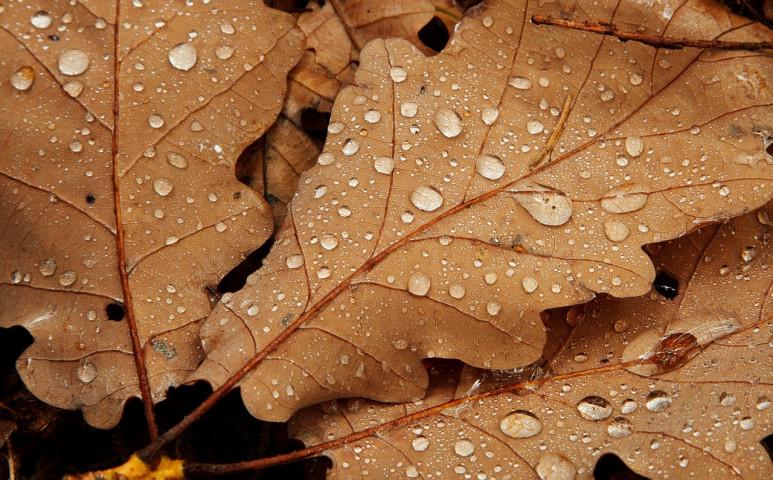 Jön a borongós, hűvös ősz!