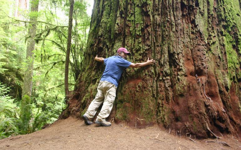 Tény: az erdő egészségesebbé tesz!