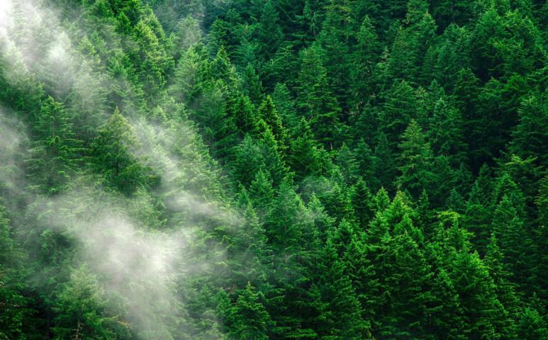 Erdősítési roham várható hazánkban is