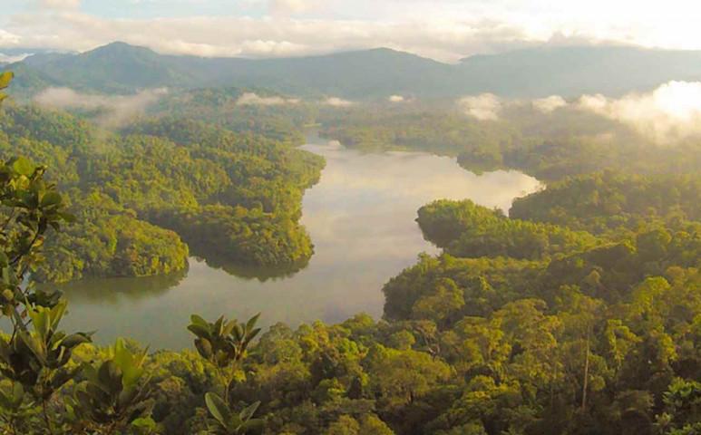 Teljesen eltűnhet az Amazonas esőerdő