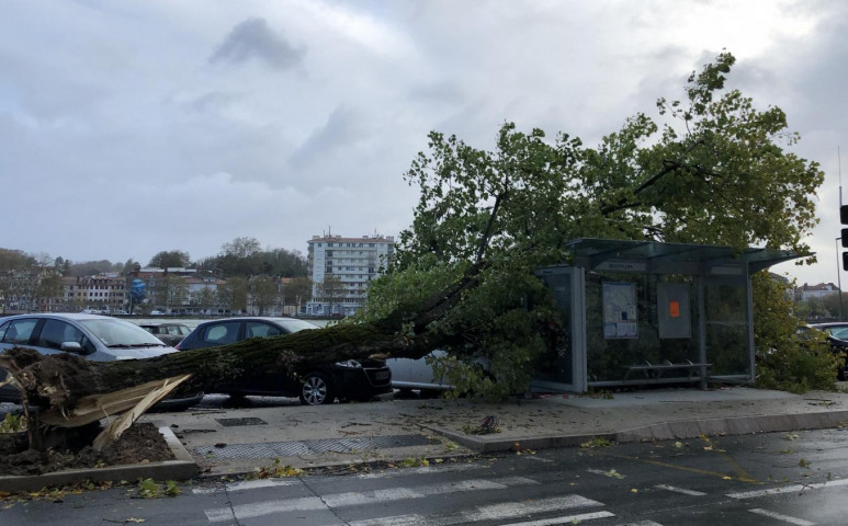Amélie fákat csavar ki Franciaországban