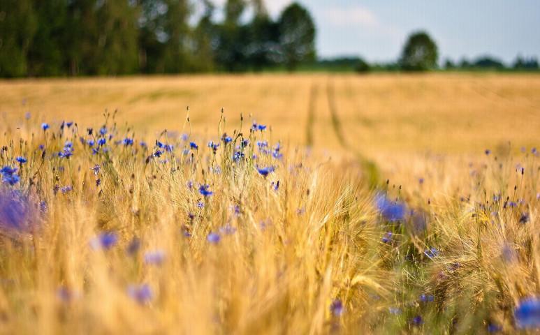 A mezőgazdaság fenntarthatósága a virágoktól is erősen függ