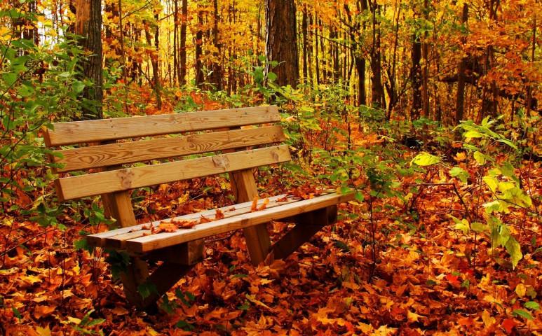 Most már tény: az erdő gyógyít - ehhez pedig csak kis idő kell