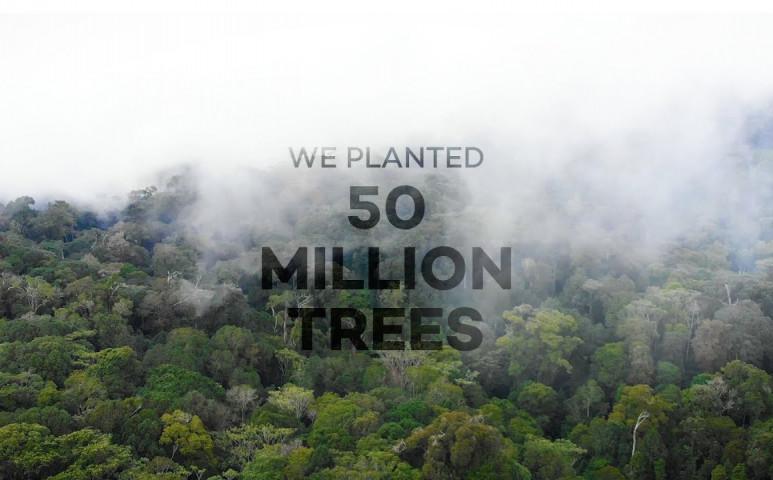 Az Ecosia, a fákat ültető kereső egy szinttel feljebb lép