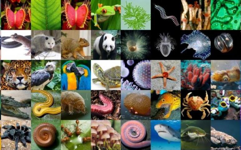 A klímakatasztrófa mellett a biodiverzitási vészhelyzetet is felismerték Ausztriában