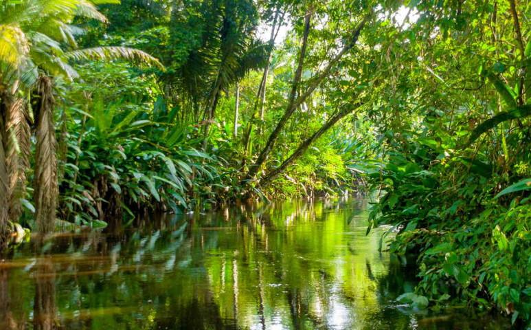 Lassan elfogy az Amazonas