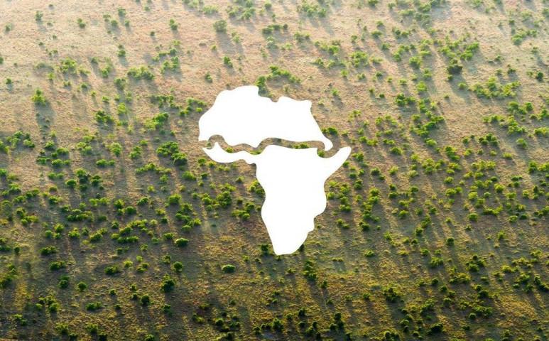 Méghogy a szennyvíz nem jó semmire - erdők nőnek a nyomán!