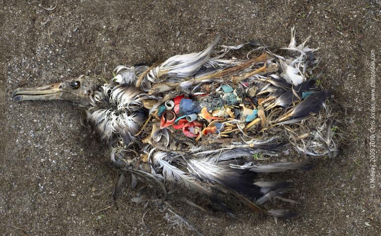 Betiltana minden műanyag csomagolást az EU
