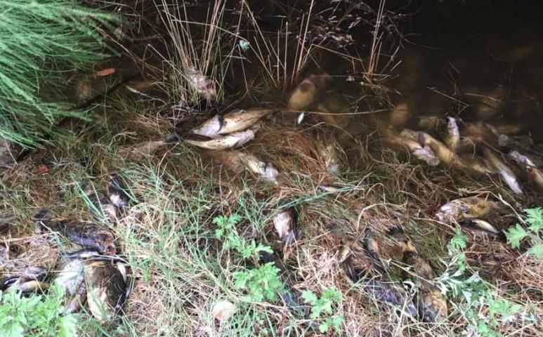 Most a halak pusztulnak tömegesen Ausztráliában