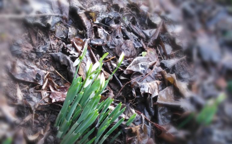 Tavaszias hétvége