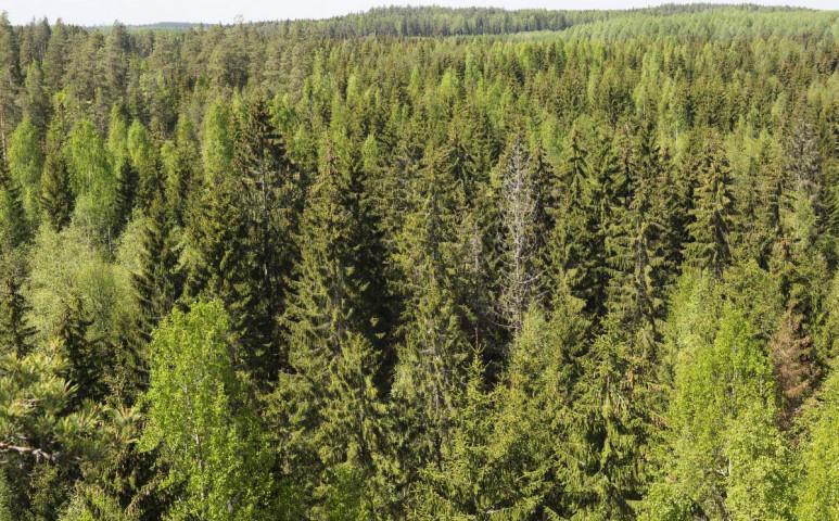 Elképesztő léptékű erdősítésbe kezd az ENSZ