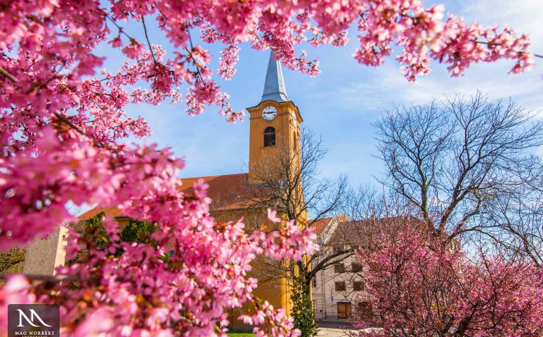 Ragyogó tavasz