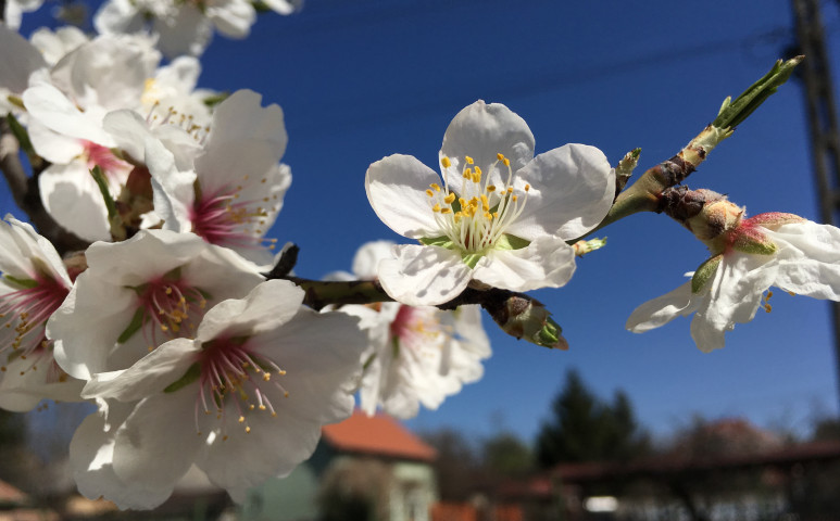 Kellemes tavaszi napok