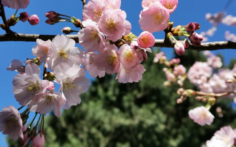 Szombatig tart a kellemes tavasz