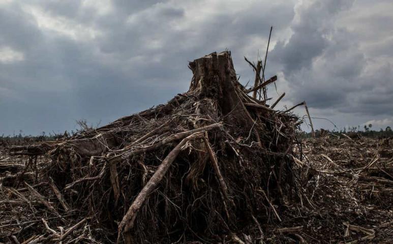 Még mi is tanúi lehetünk az Amazonas-ökoszisztéma összeomlásának