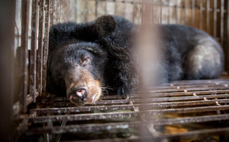 Kína ellentmondásos intézkedése a koronavírussal kapcsolatban a természetvédelemnek is rossz