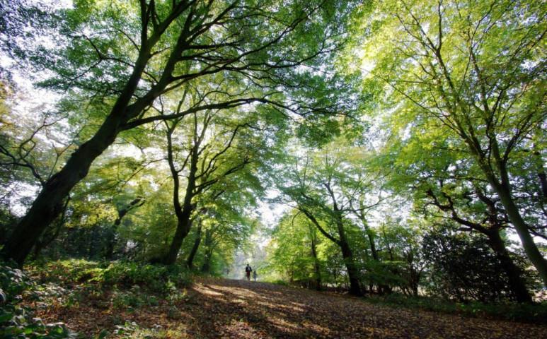 Mi is a városi fák valódi értéke? 11 milliárd font...