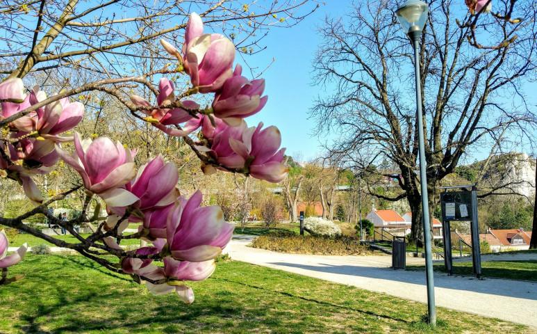 Gyönyörű tavasz