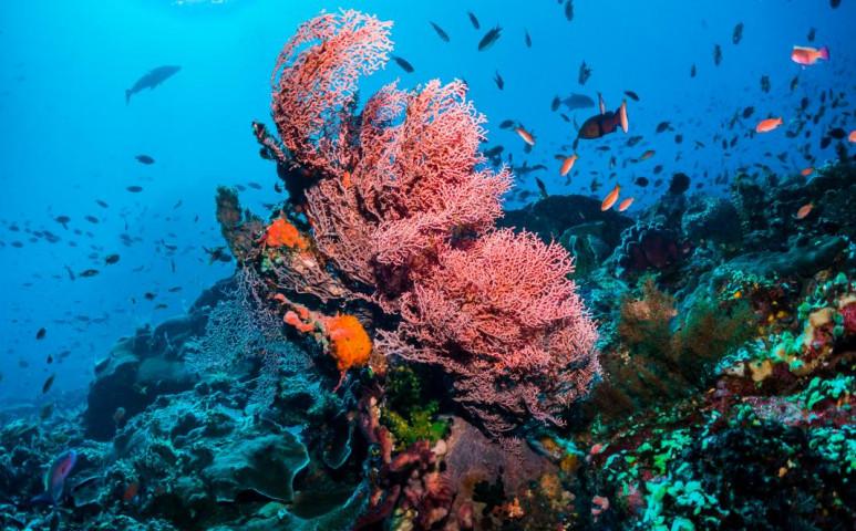 Védjük a korallokat, fehérítsük ki a felhőket!