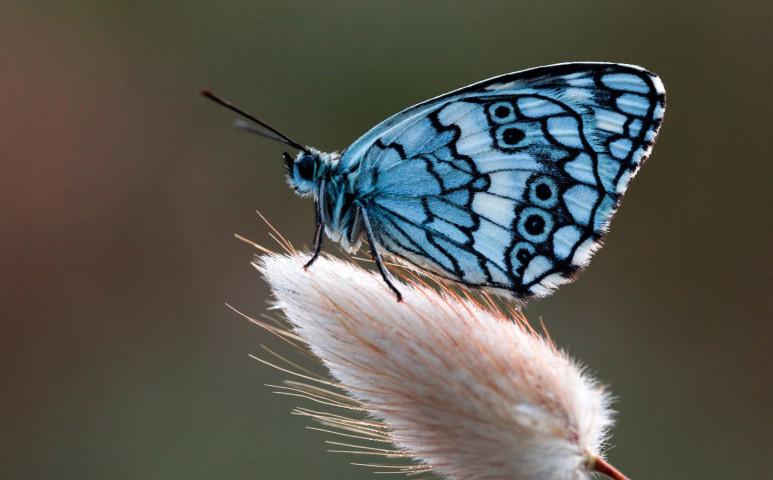 Borzalmas mértékű rovarpusztulással néz szembe a világ