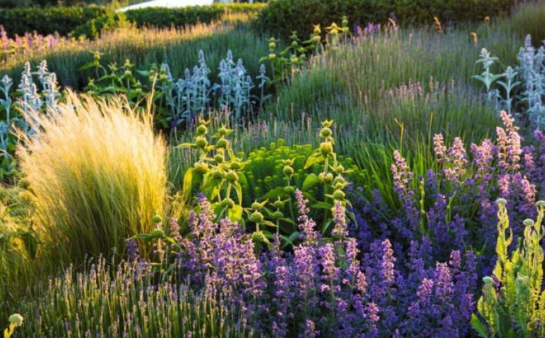 Íme az igazán költséghatékony, szárazságtűrő kert, vagy balkon